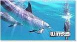 Screenshot_dolphins.jpg