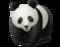 20090502155833_1290011110_20090502155800_555152133_Panda.png